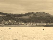 Dolphins would suddenly appear - these are at Cullen (south side of Moray Firth)