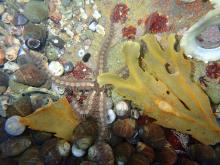 A starfish, Cresswell rockpool - no relevance, just liked the picture